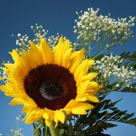 0707_sunflower